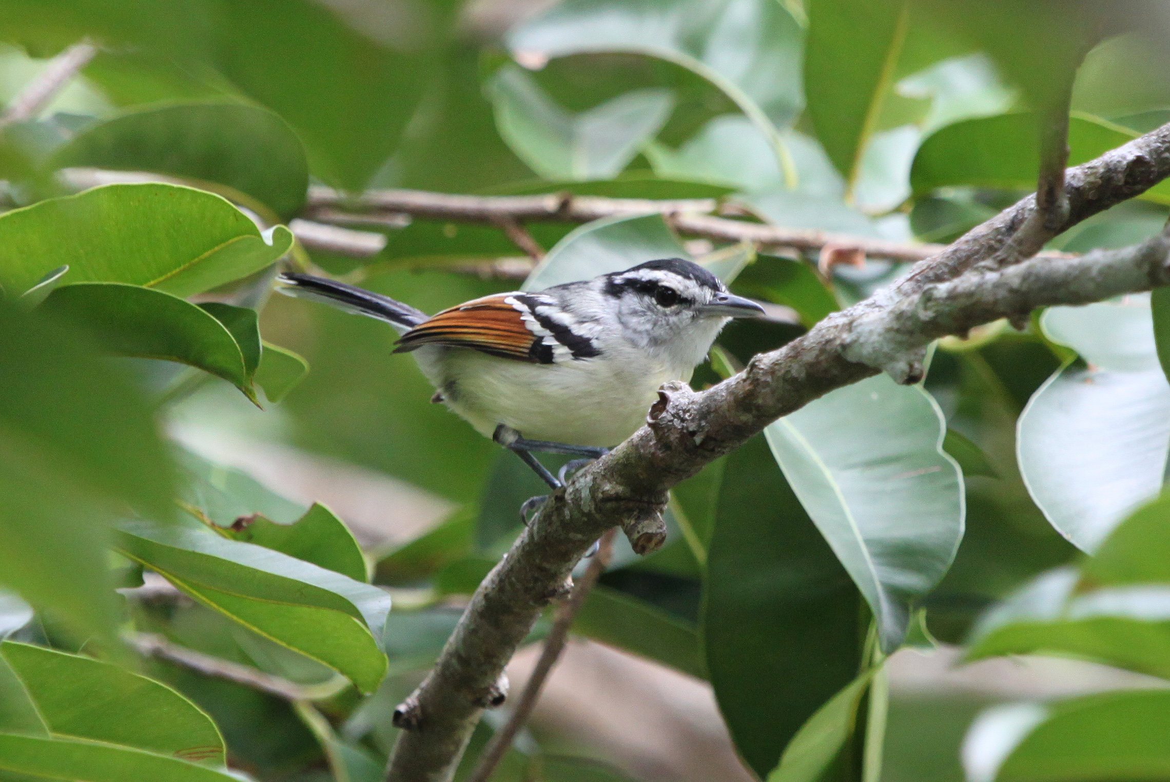 The Tropical Forest Is Home To Rich Biodiversity Credit A