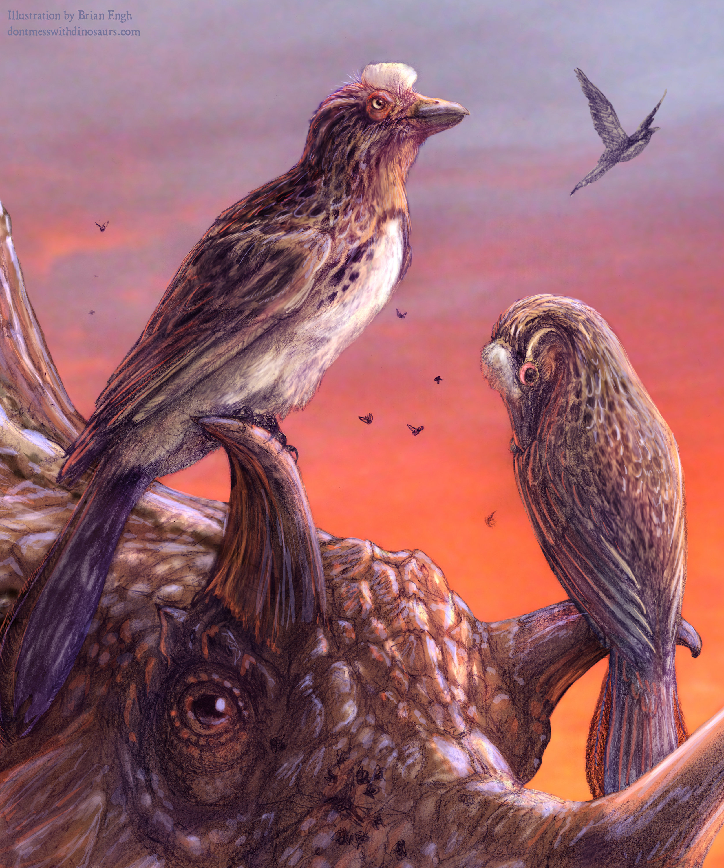 Rare fossil bird deepens mystery of avian extinctions