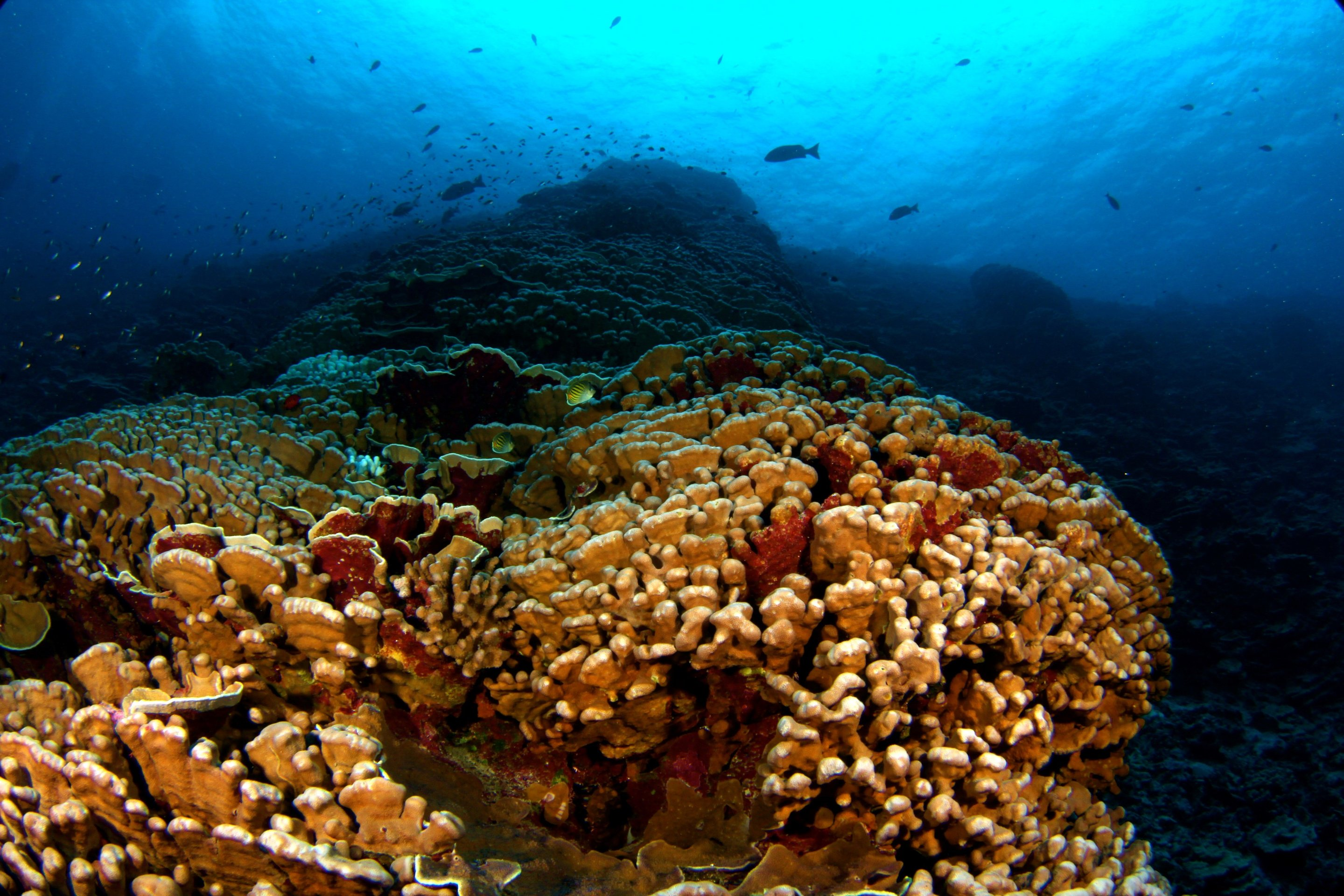 Carbon dating coral reefs