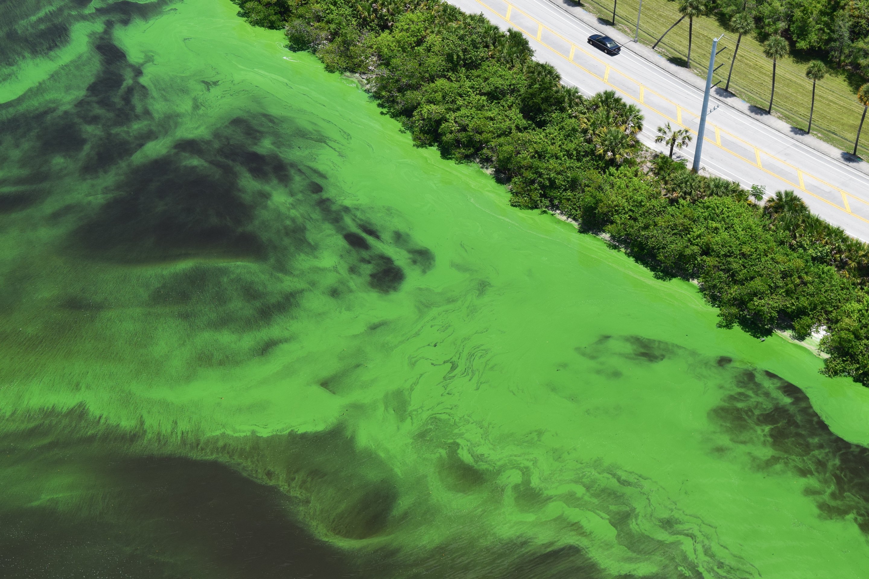 an analysis of the topic of red tides and the blooms of algae Browse algal bloom news, research and analysis from the conversation follow topics us gun control mass why toxic algae blooms like florida's are so.