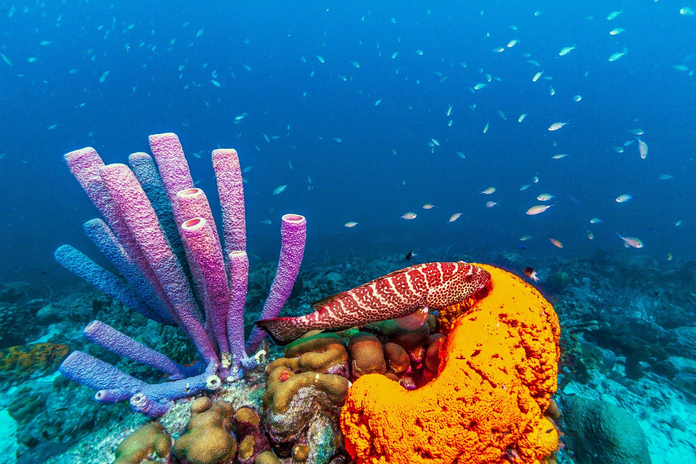real ocean sponges - HD2880×1920