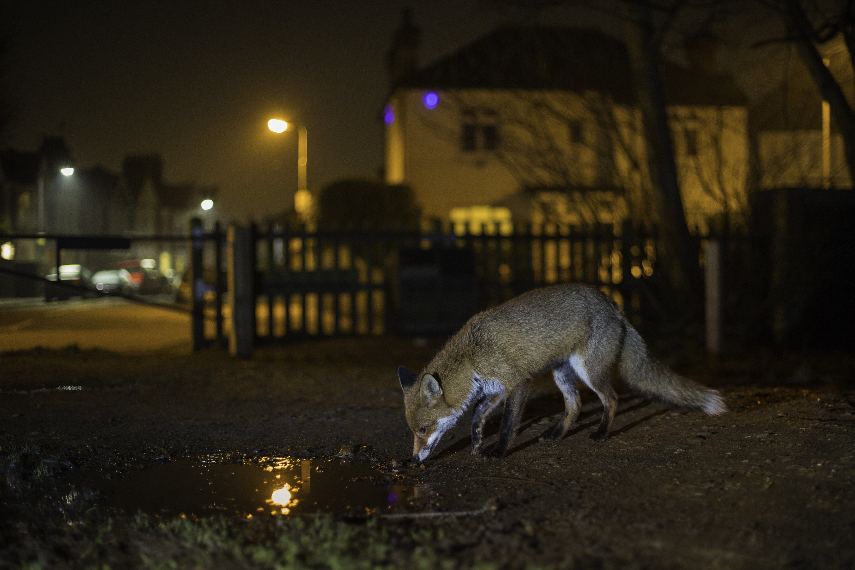 To avoid humans, more wildlife now work the night shift