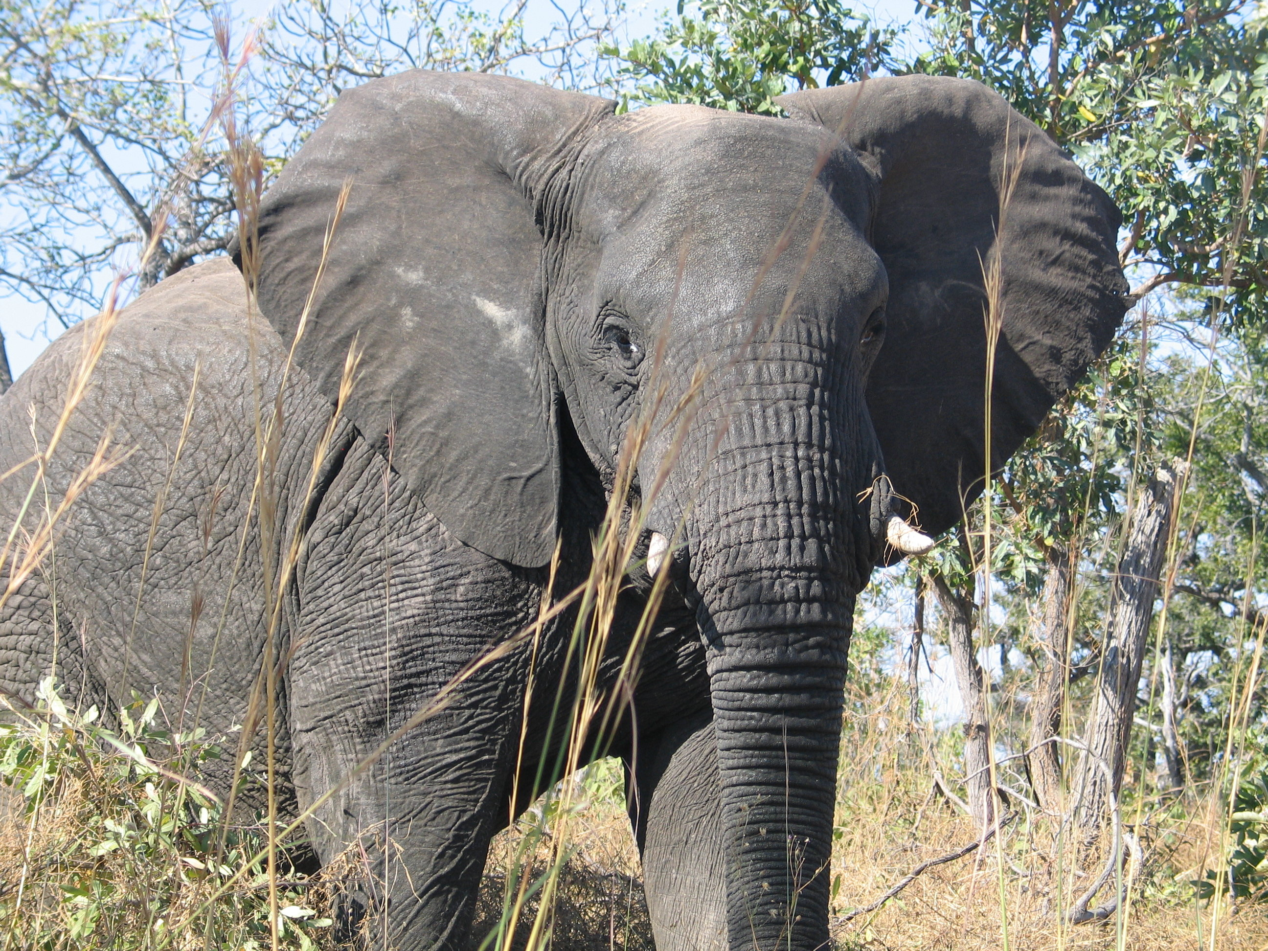 What Elephants Unique Brain Structures Suggest About Their Mental