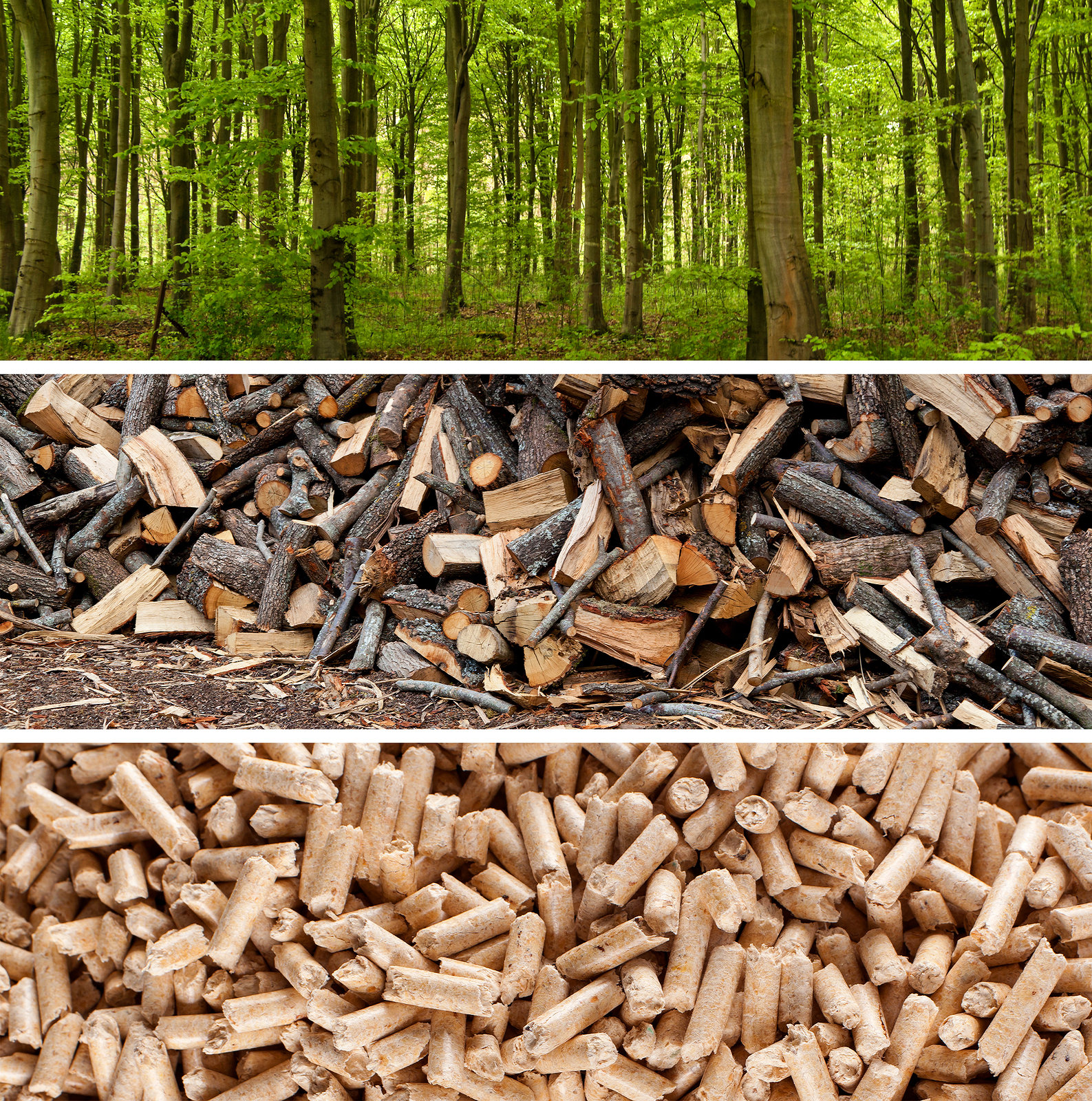 Wood pellets renewable but not carbon neutral