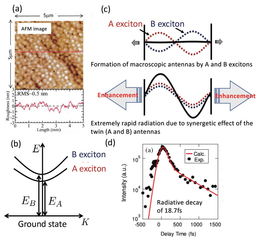 Excitonic Radiative Decay Faster Than Thermal Dephasing In