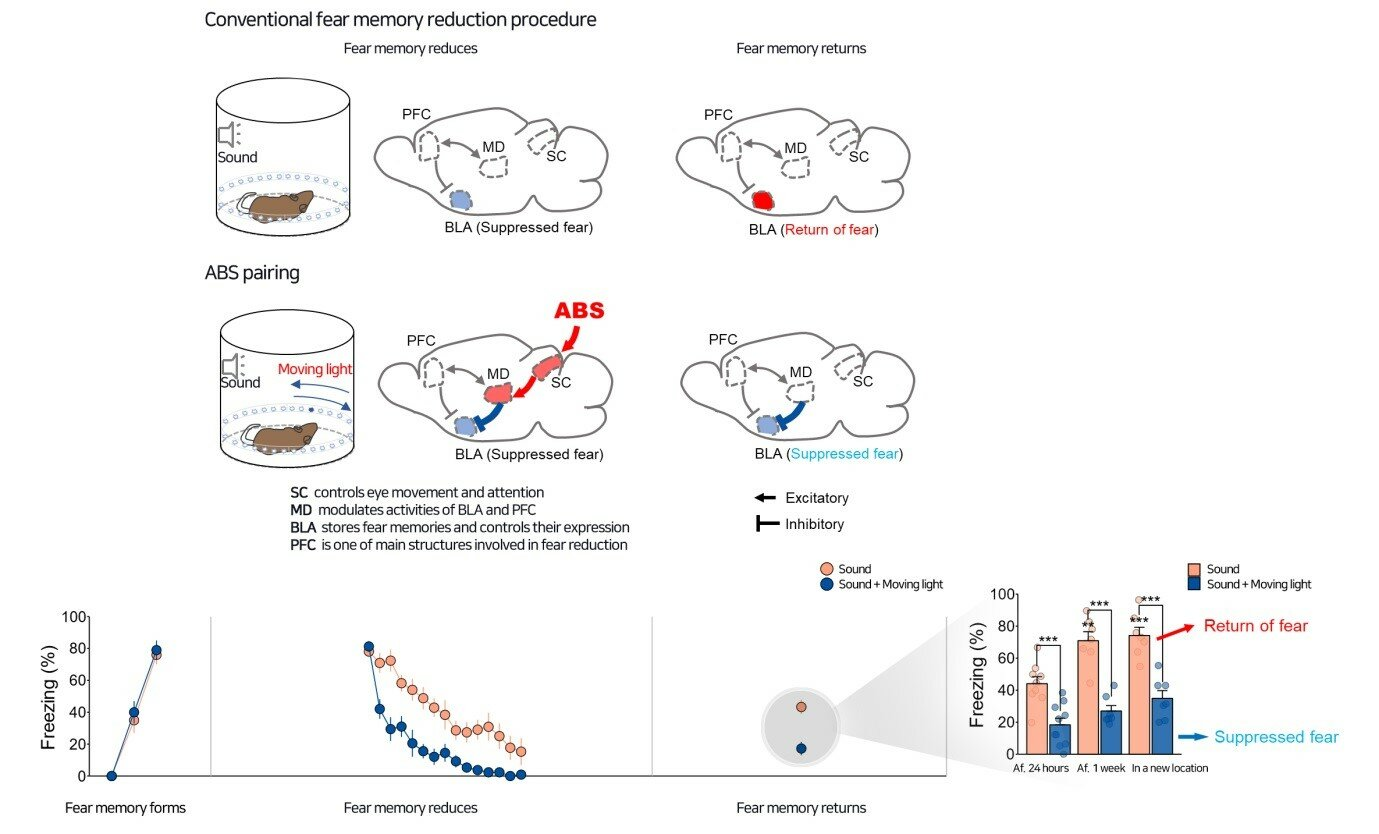 Neural circuits underlying a psychotherapeutic regimen for