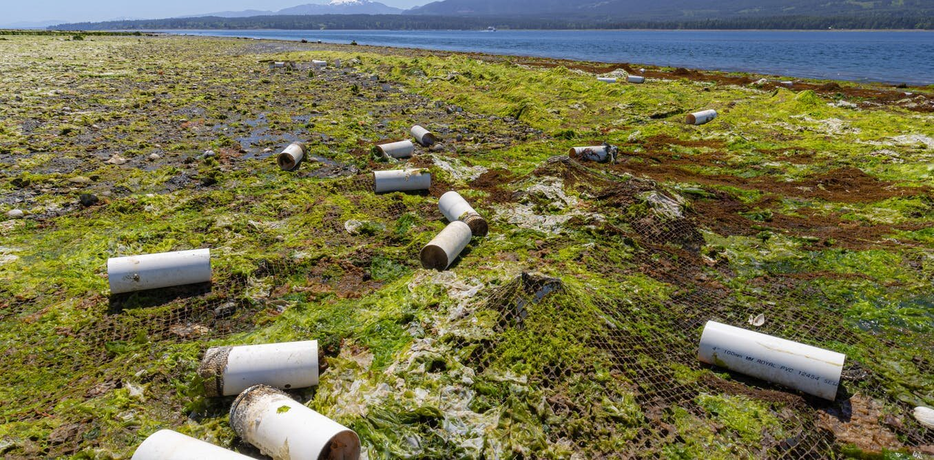 photo of The demand for luxury shellfish is polluting the ocean with plastic image