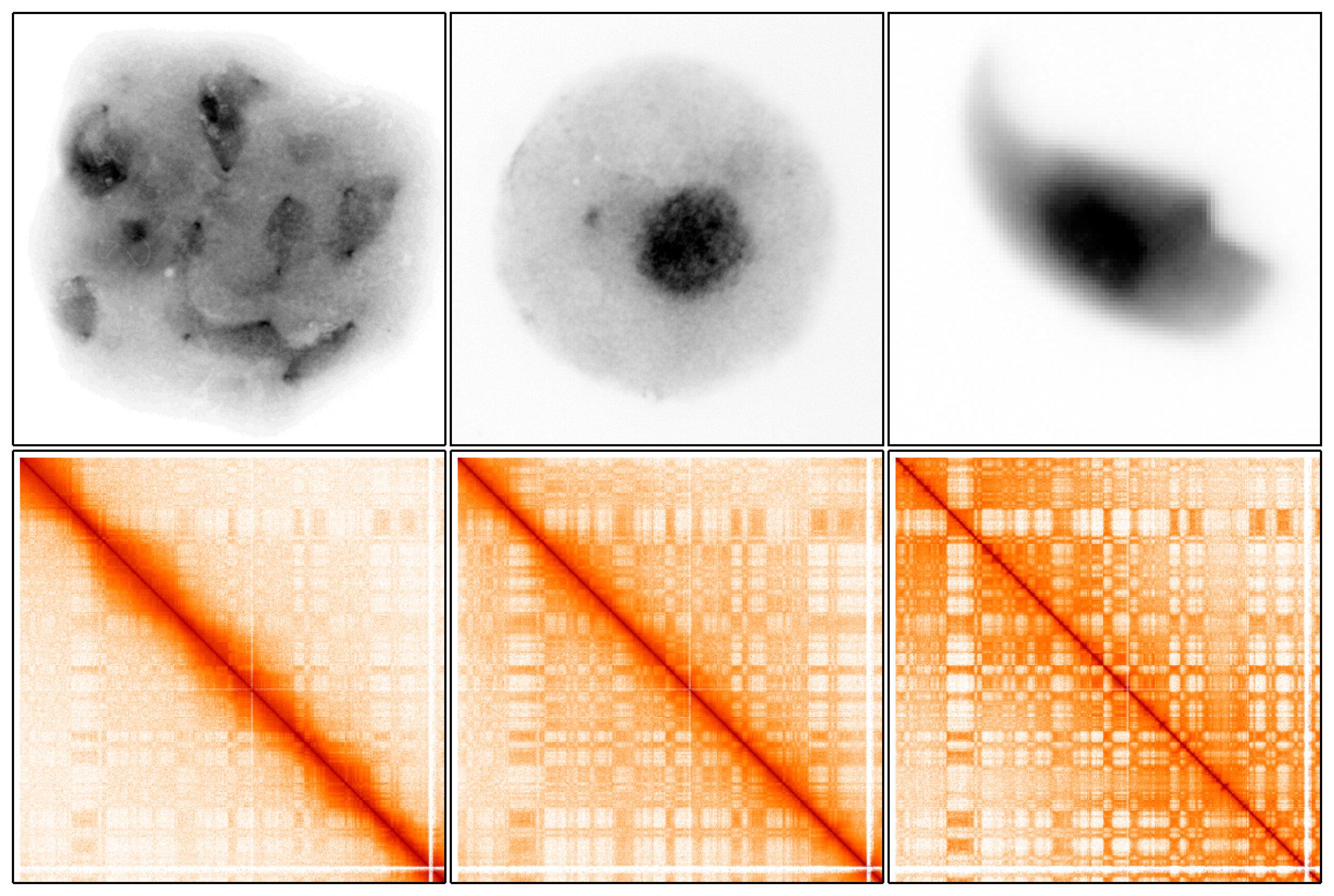 Scientists reveal how 3-D arrangement of DNA helps perpetuate the species