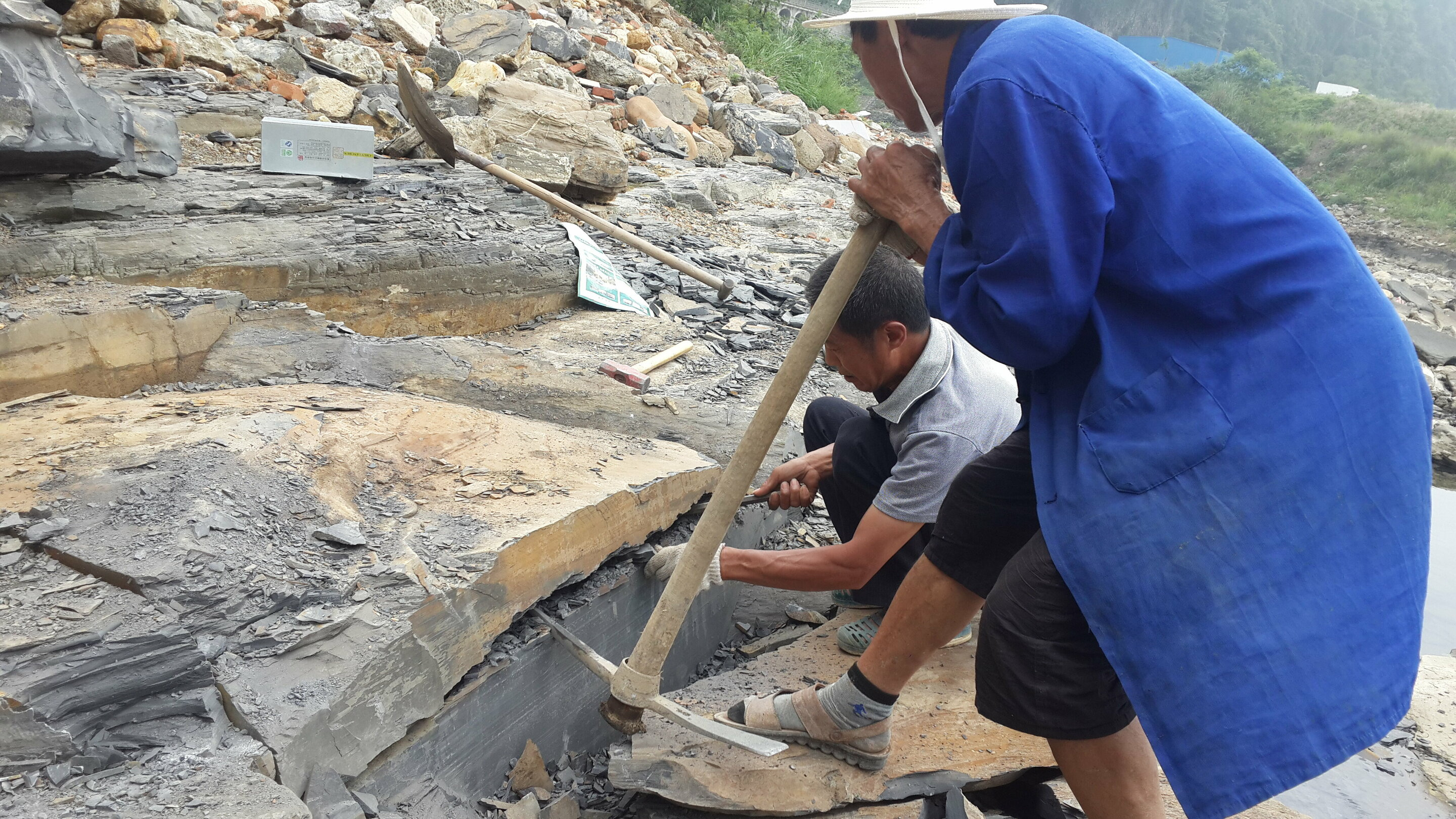 Treasure trove of marine fossils from 'Cambrian explosion' found in China