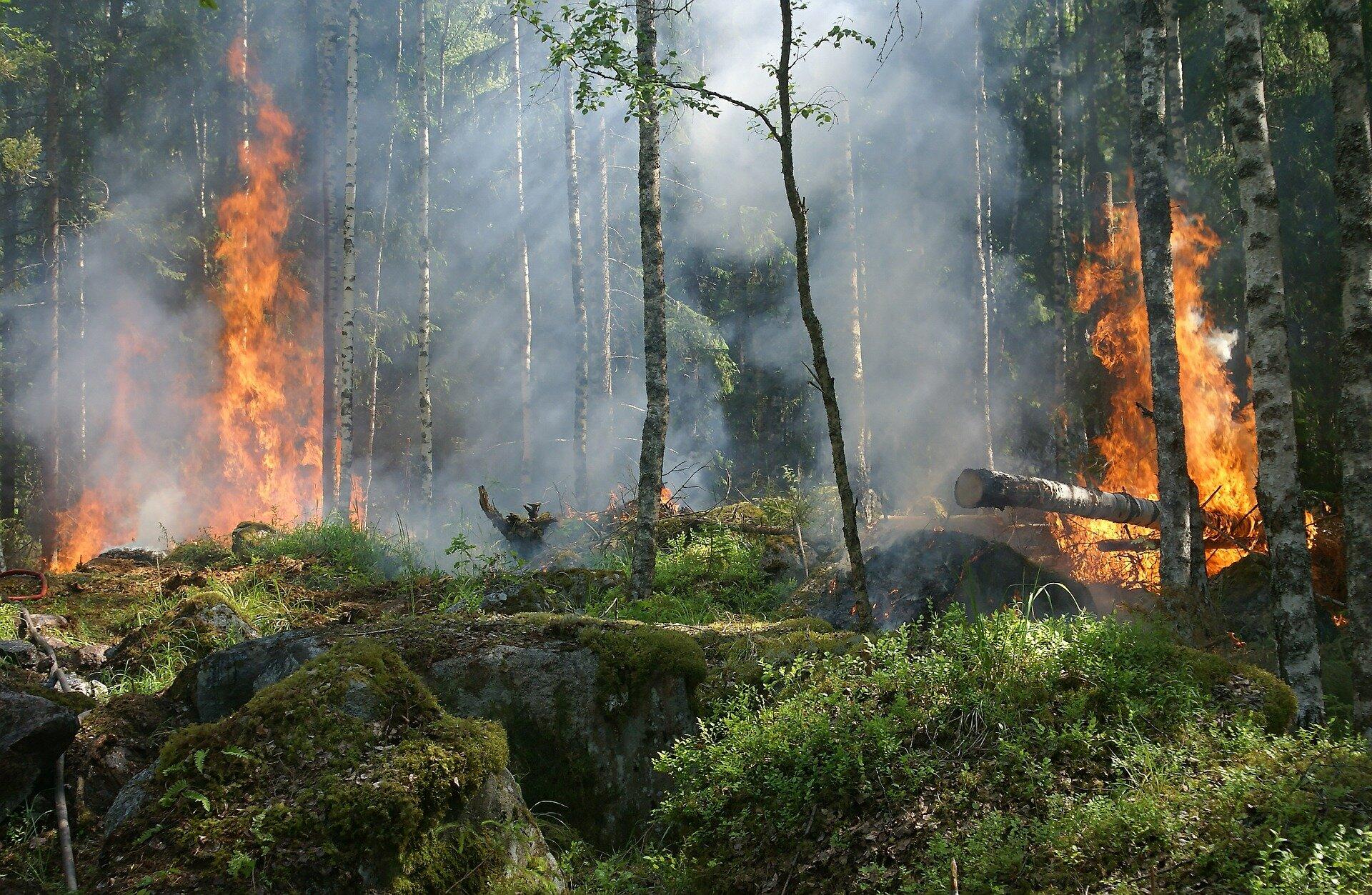 Sustainable Land Management Key to Reducing Amazon Wildfires