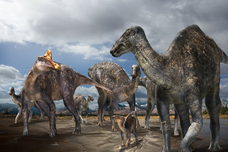 firstconfirmed occurrence of a lambeosaurine dinosaur