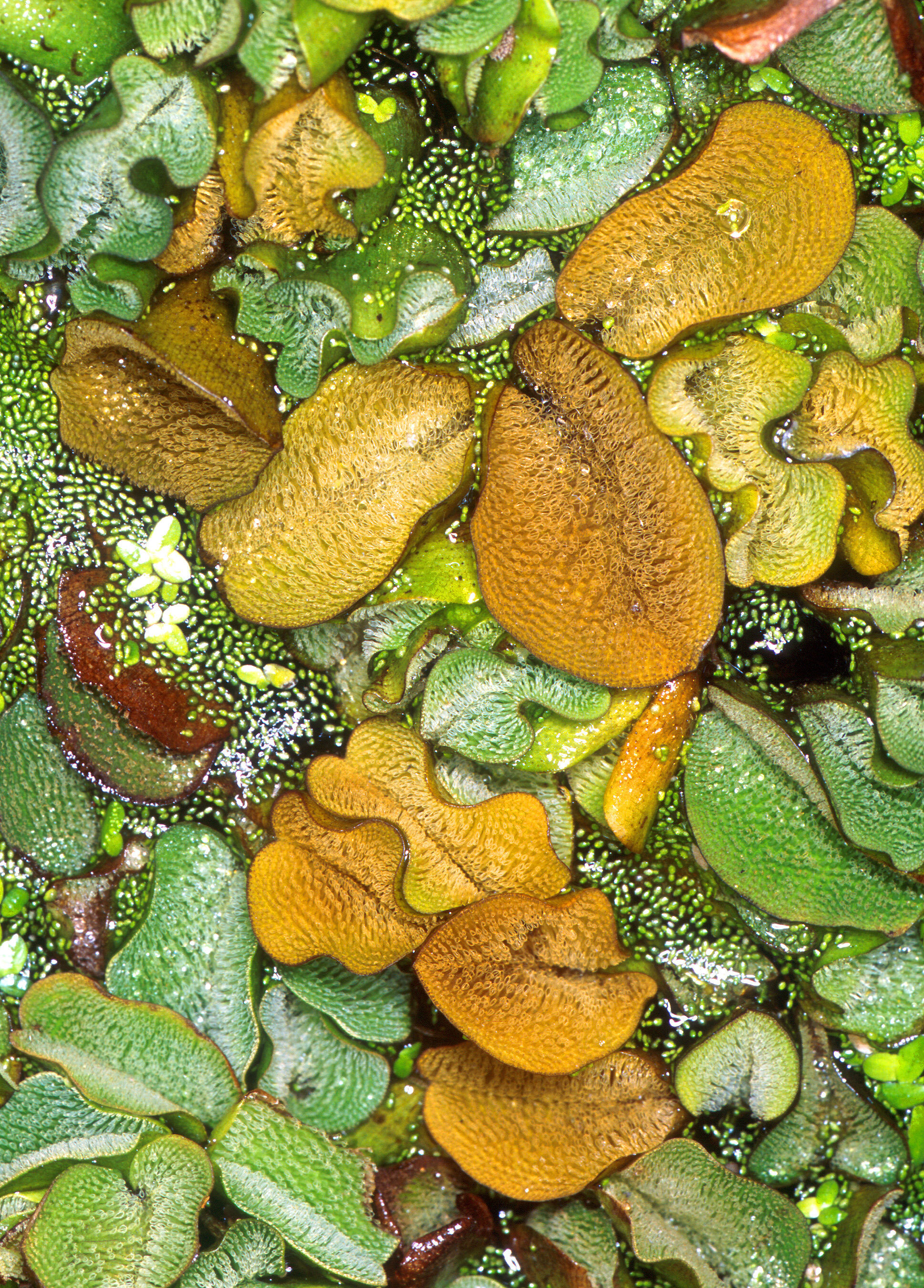 photo of Fungus fights oxygen-sucking water weed image