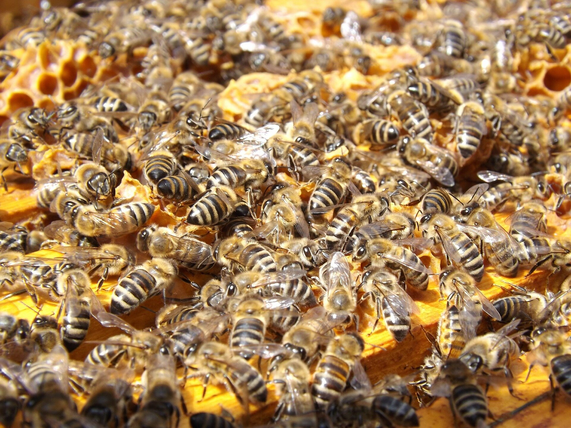Students create probiotic to help honeybees fight deadly fungus