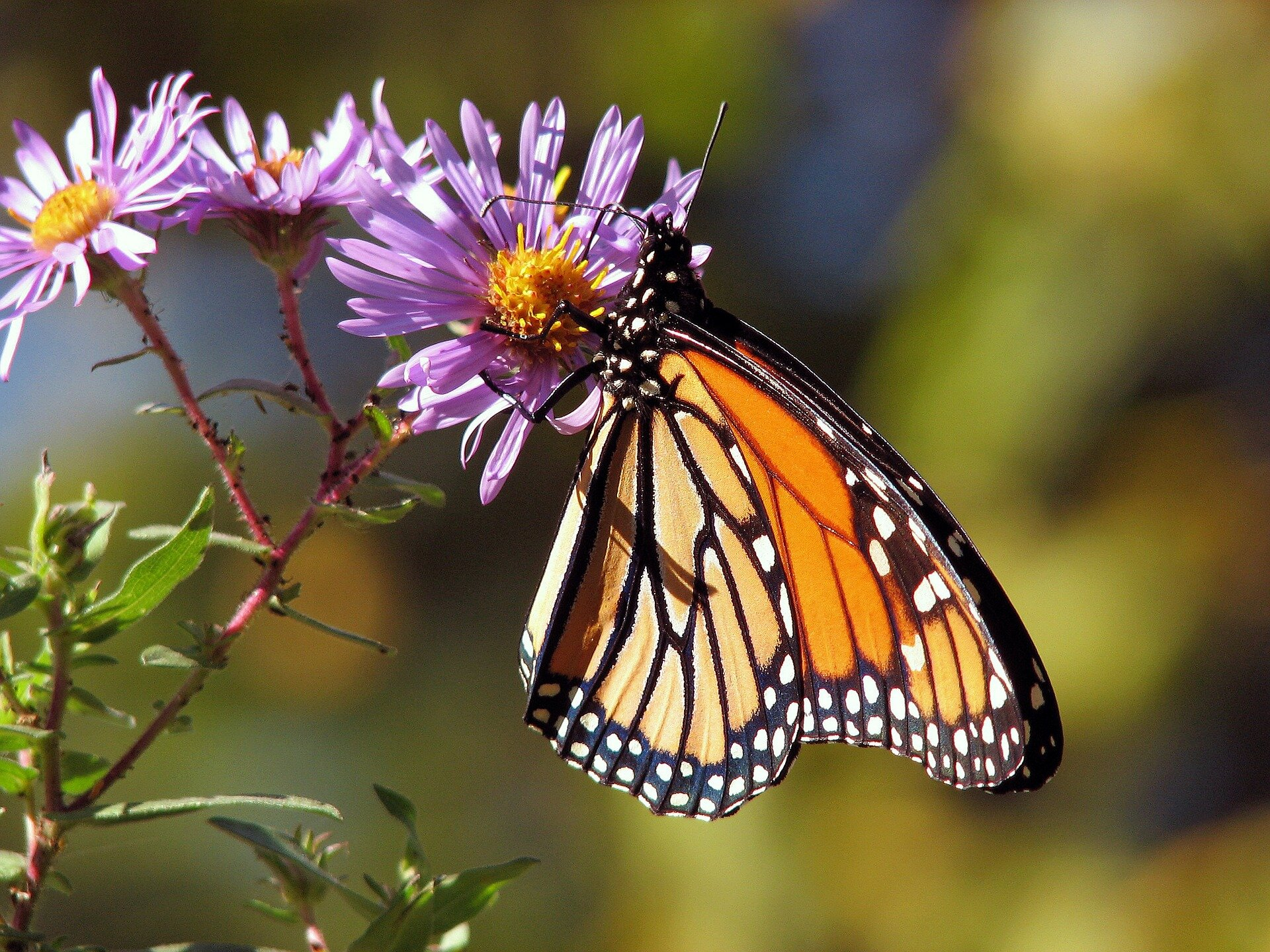 Researchers find neonicotinoids present a danger to pollinators