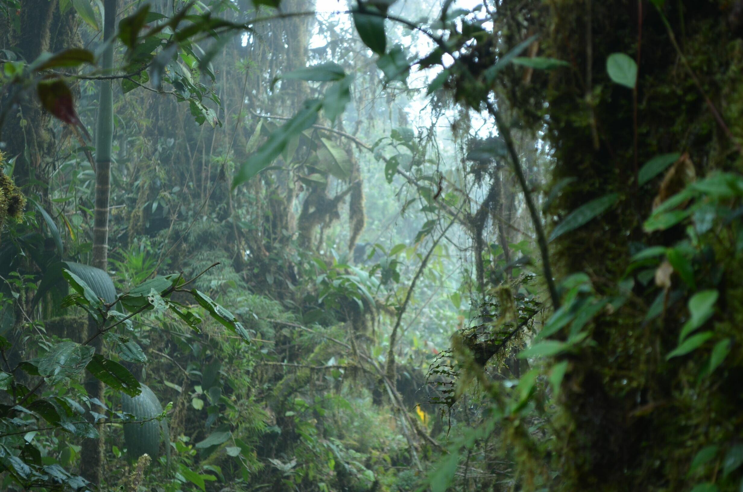 Mega experiment shows species interact more towards tropics and lowlands bb74c1757e