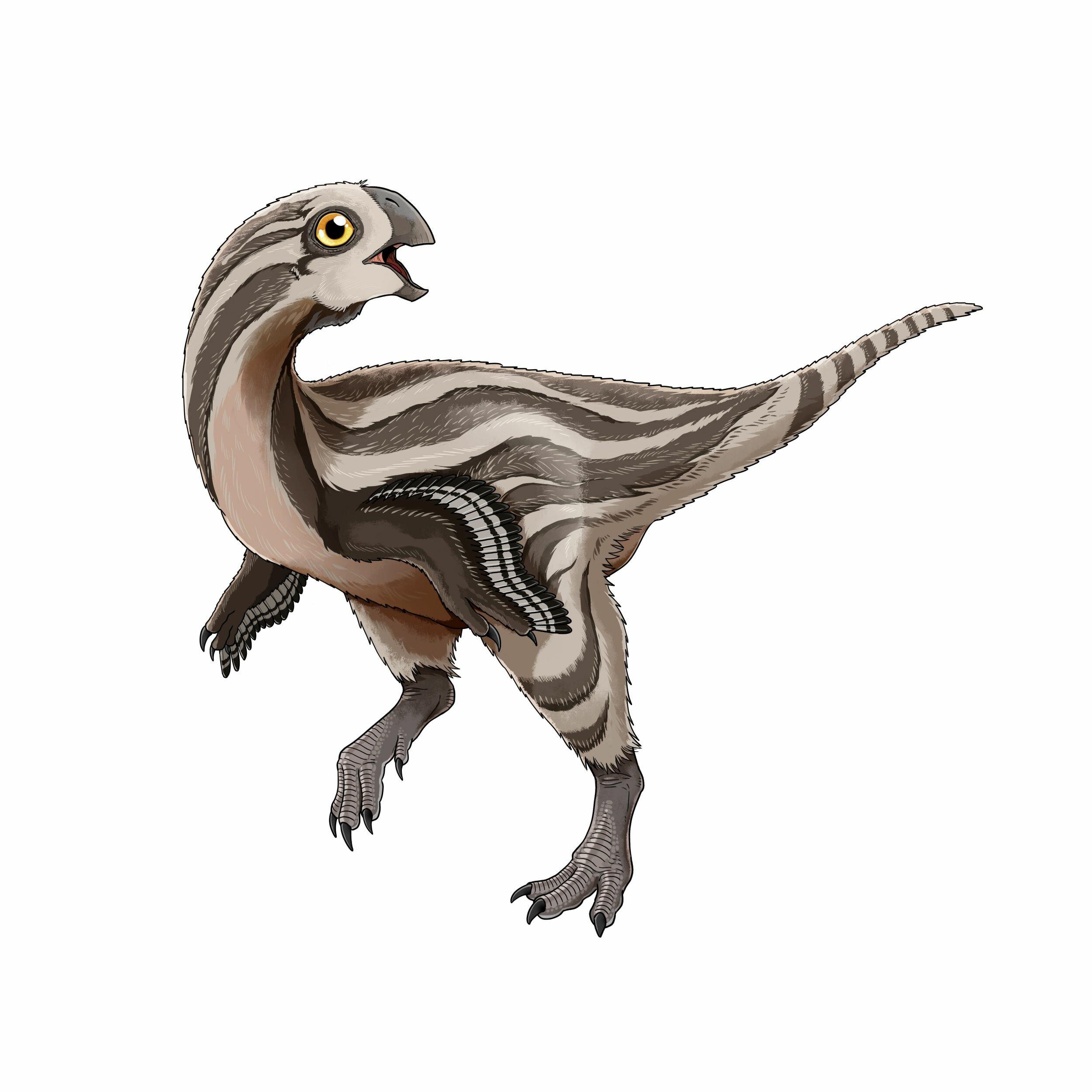 Nuevo oviraptorido de Asia Newoviraptor