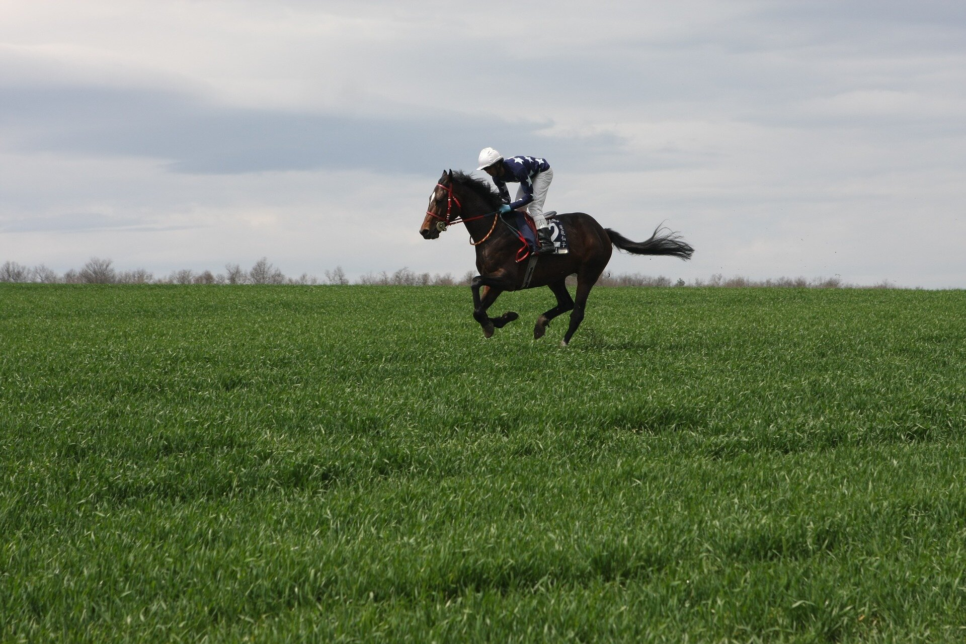photo of Why is even a small cough a big problem in a racehorse? image