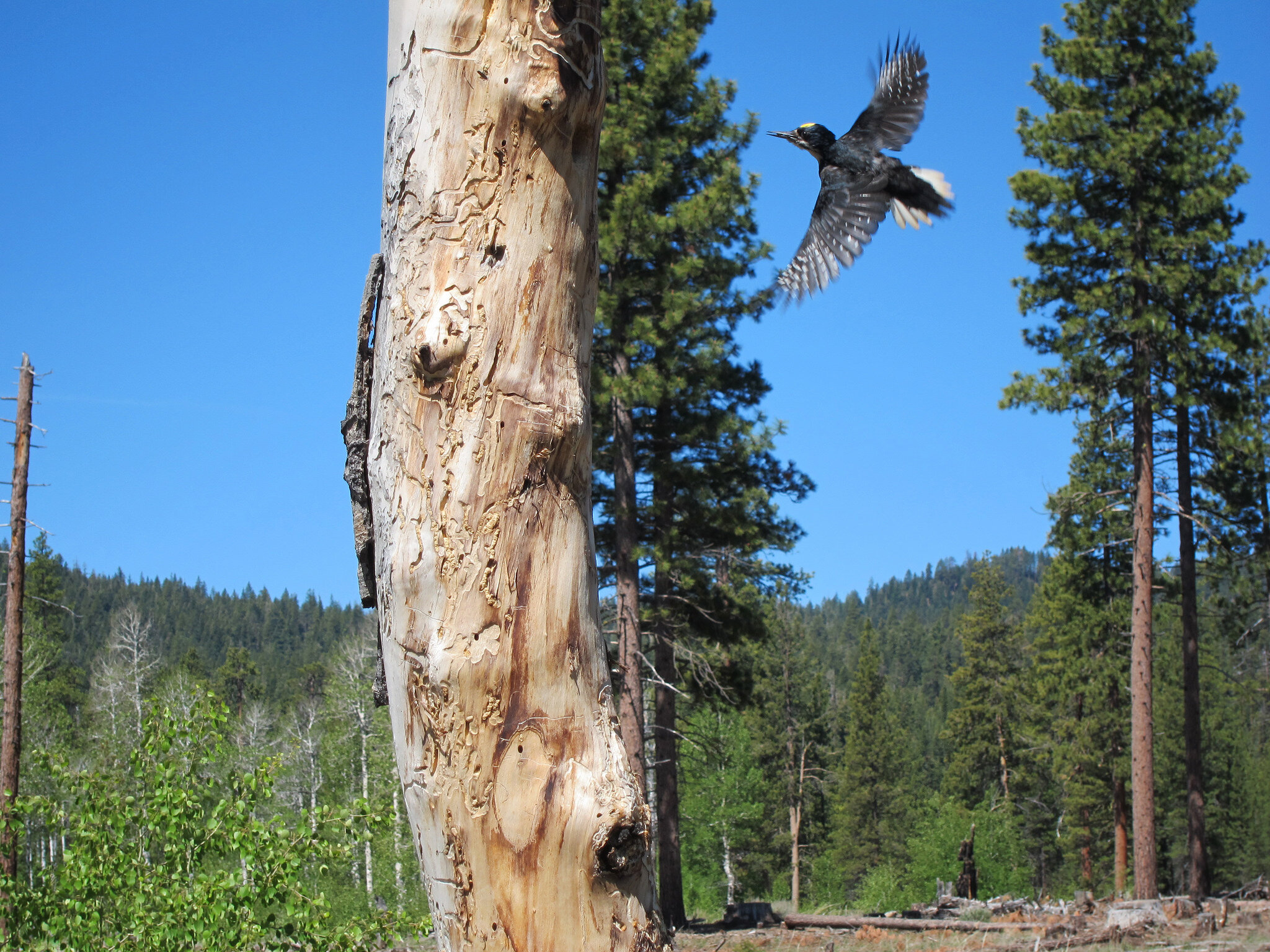 Recent drought may provide a glimpse of the future for birds in the Sierra Nevada