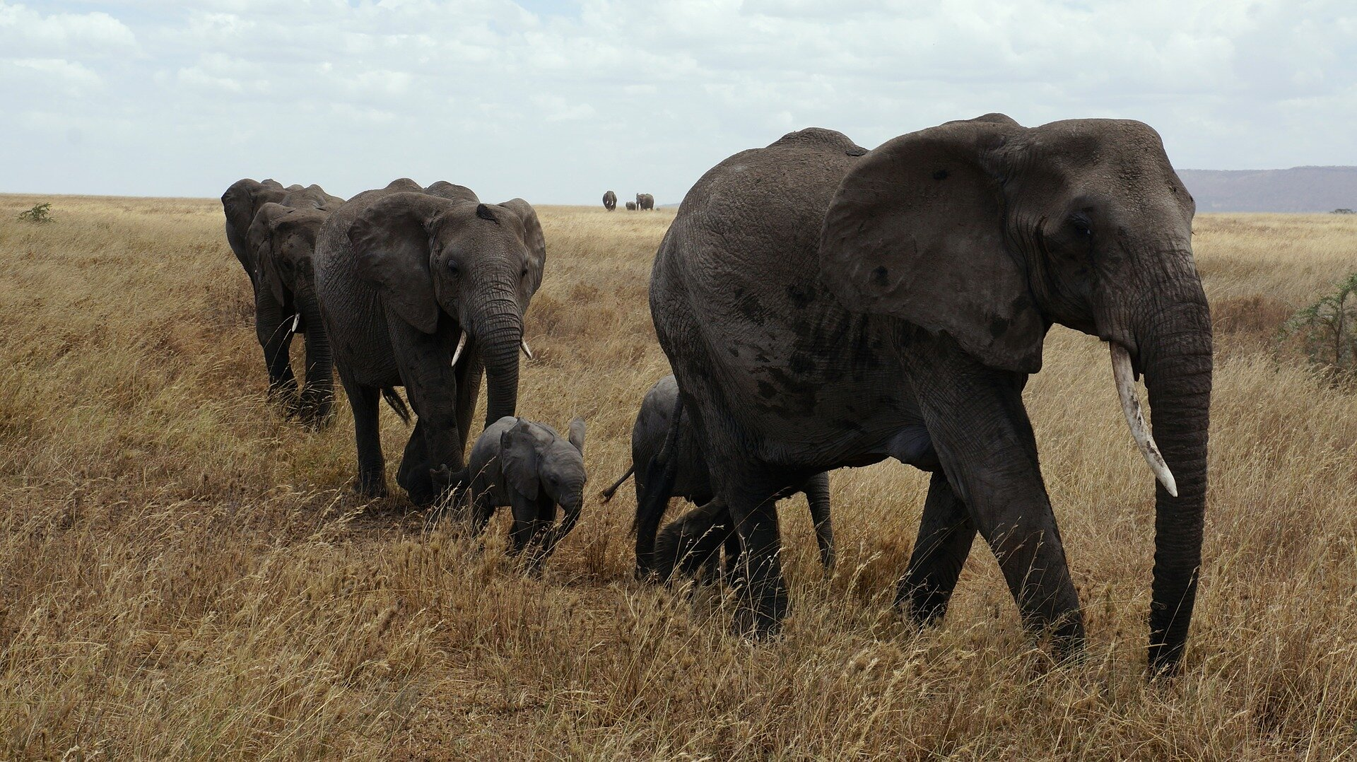 When development and conservation clash in the Serengeti