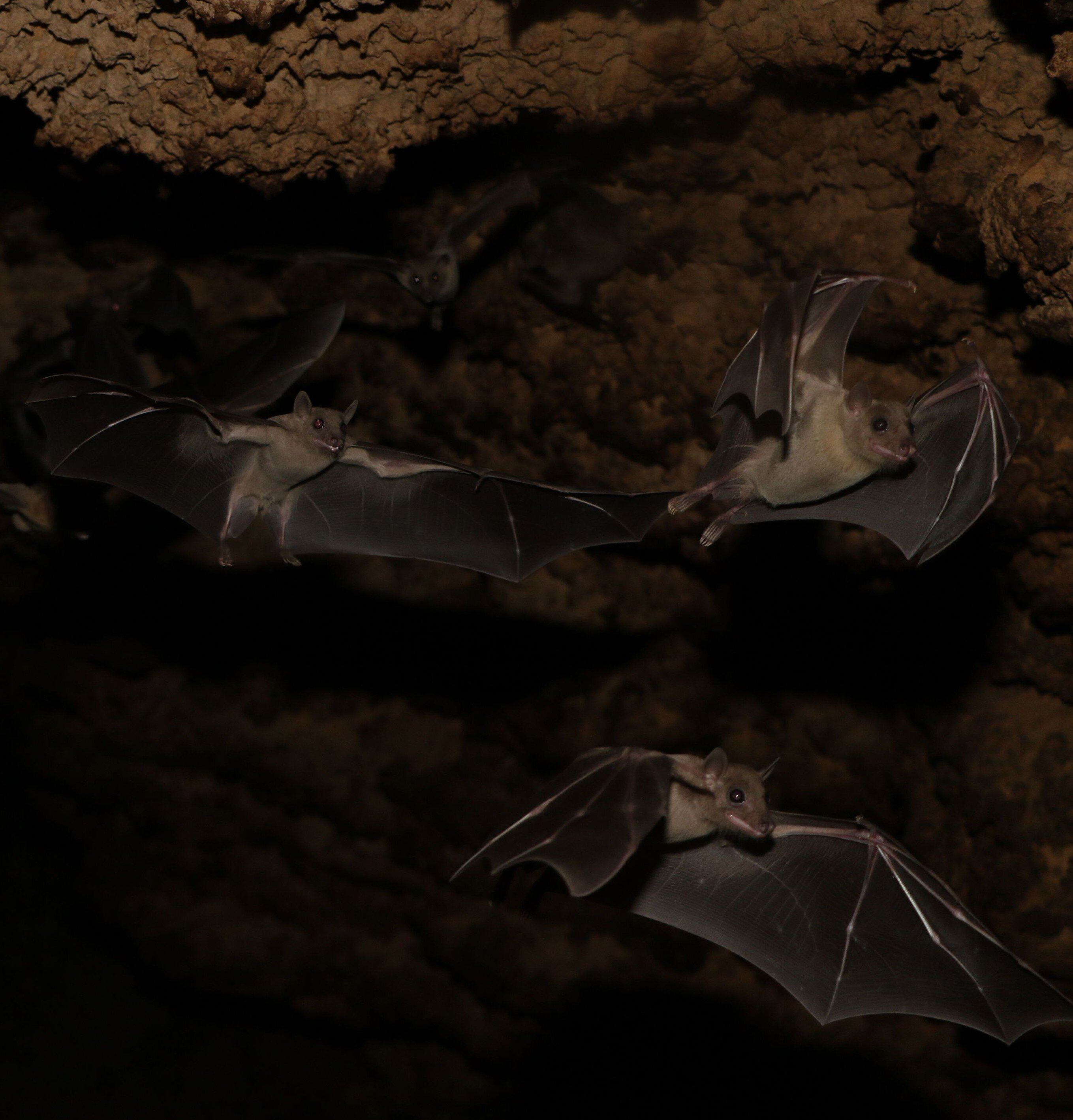 These Fruit Bats Trade Food For Sex-7302