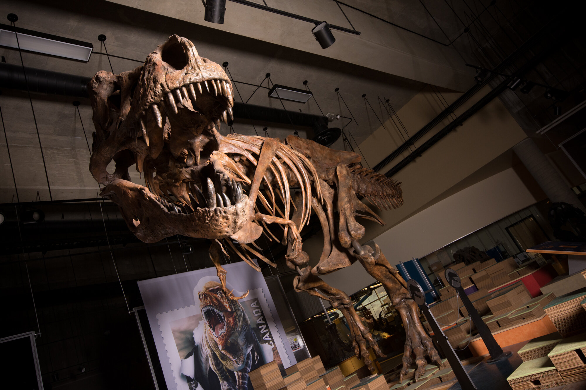 Real Dinosaurs T Rex Paleontologists report...