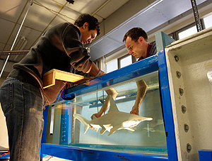 Researchers investigate fishy sense of smell w video for Fish tank smells
