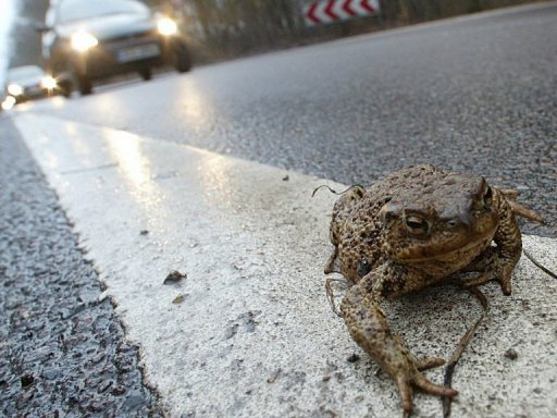 toads earthquake exodus