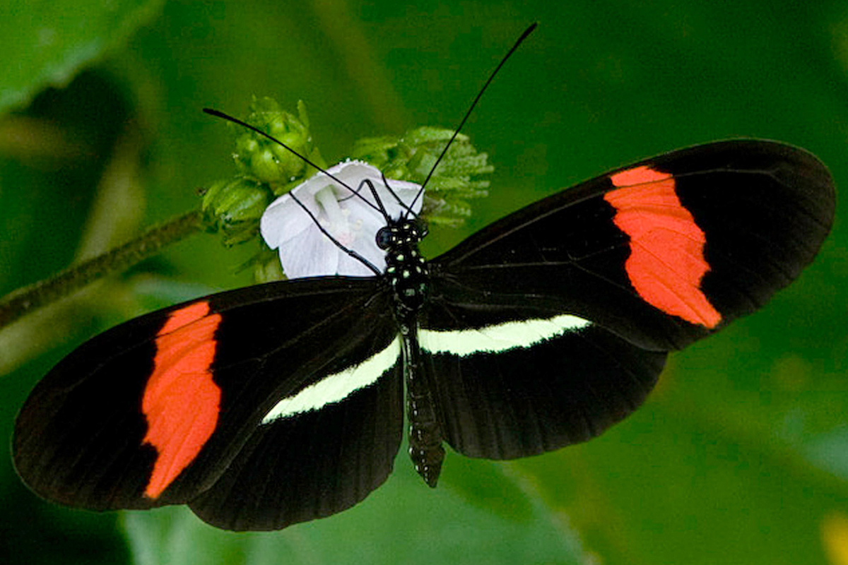 Butterfly vision, wing colors linked: Ability to identify own ...