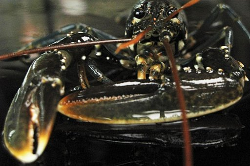 illegal fishing and climate change are decimating shrimp and lobster populations in central america threatening a two billion dollar industry and 136000
