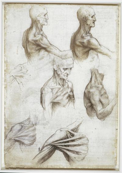 Leonardo\'s anatomical sketches fascinate modern-day anatomist