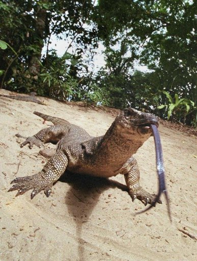 Malaysian Authorities Save Hundreds Of Lizards
