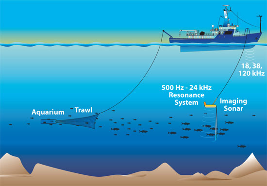 Now In Broadband Acoustic Imaging Of The Ocean