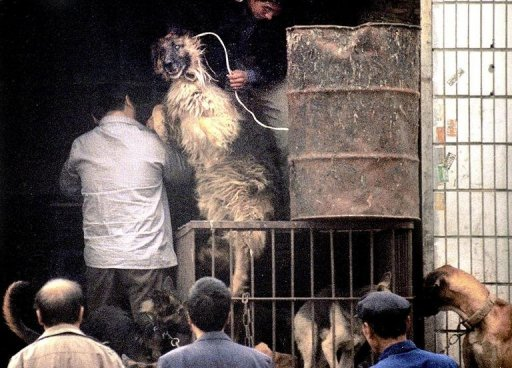 Dog meat could come off Chinese menus