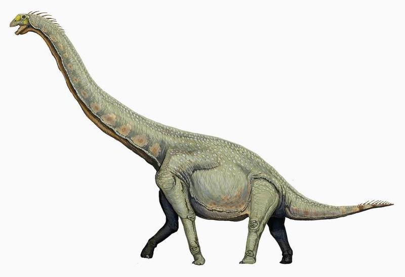 Mammal diversity exploded immediately after dinosaur extinction
